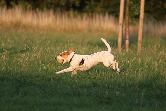 dog-1236296_640