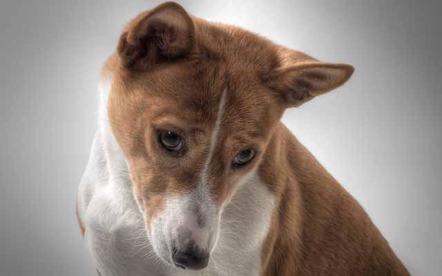 dog-601216_640
