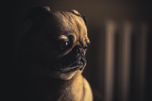 dog-690176_640
