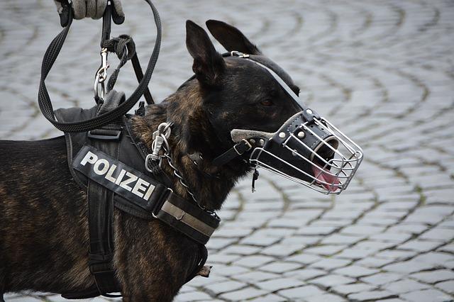 police-1321255_640