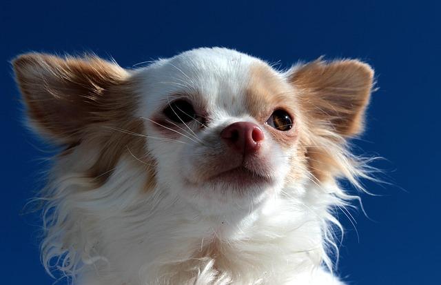dog-1203225_640