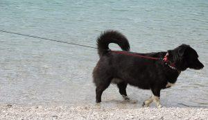 dog-56558_640