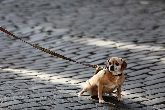 dog-926785_640
