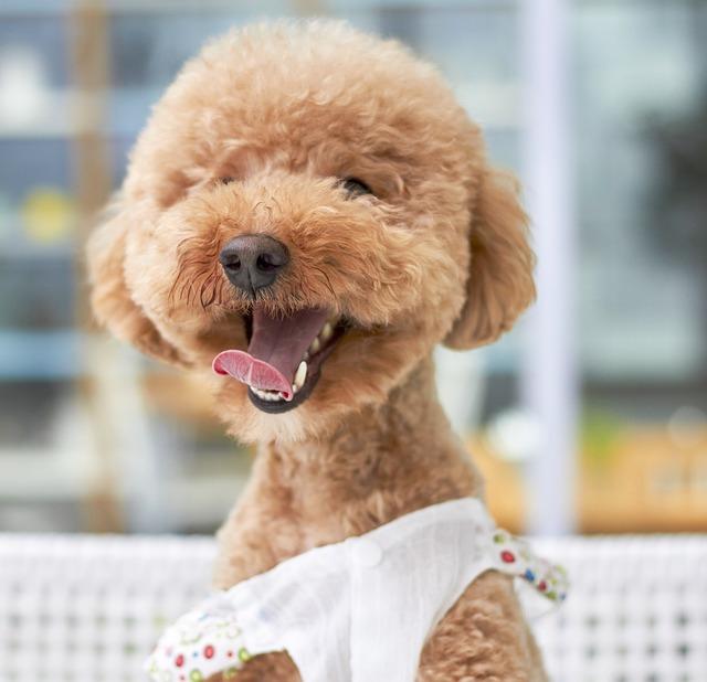 dog-1558961_640