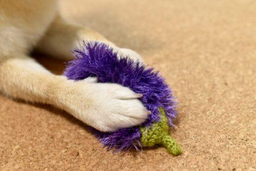 犬のおもちゃ